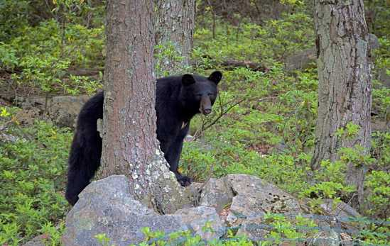 Bear out Back