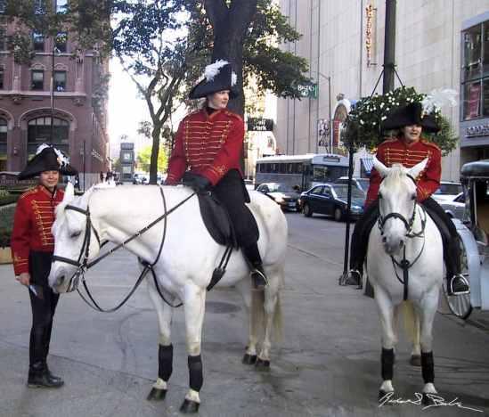 Horses on Michigan