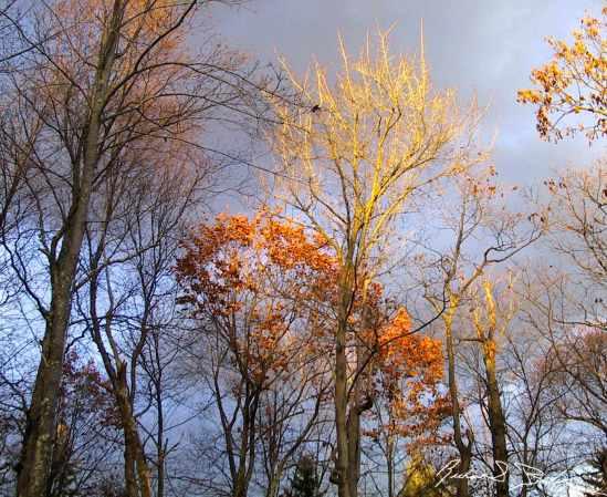 Pocono Autumn