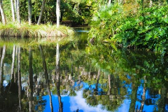 Bok Reflections