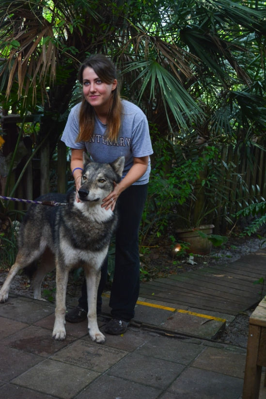 Volunteer with Wolf