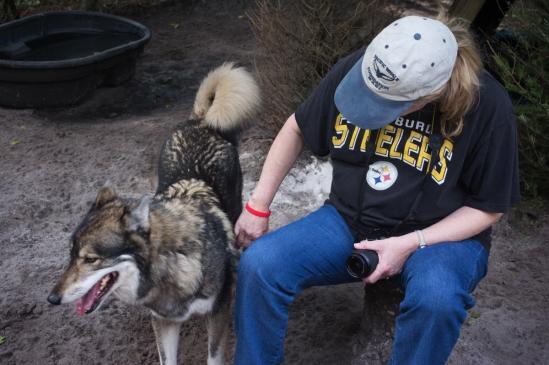 Petting a Wolf