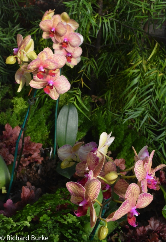Orchids on Display