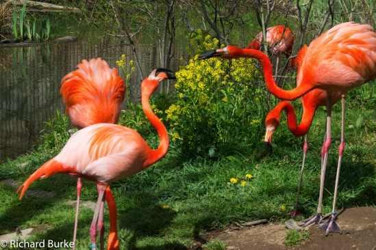 Flamingo Fight!