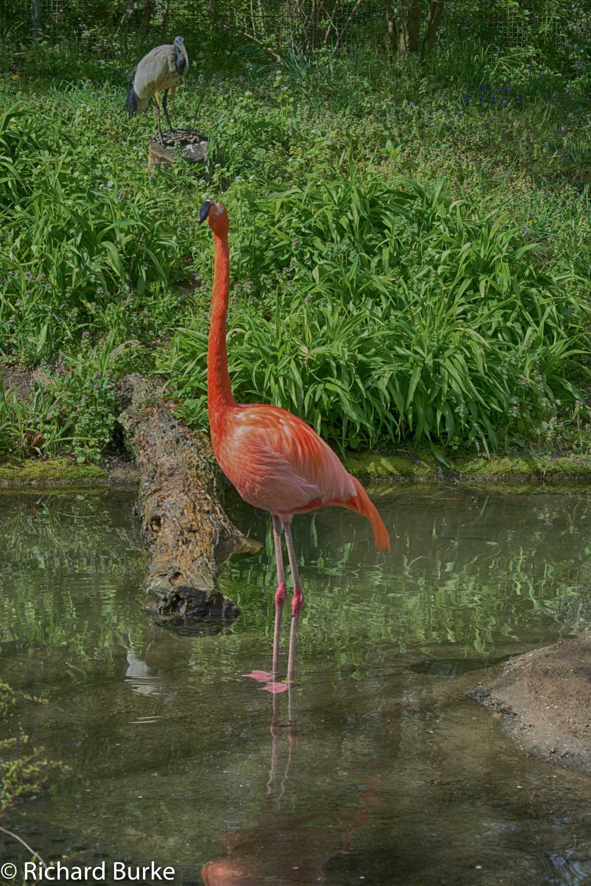 Strange Birdfellow